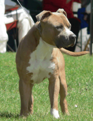 Stoner at the Royal Bathurst Show - 2008